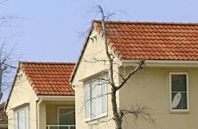 屋根裏の通気口